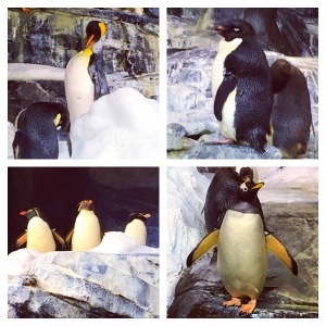 Because Penguins!